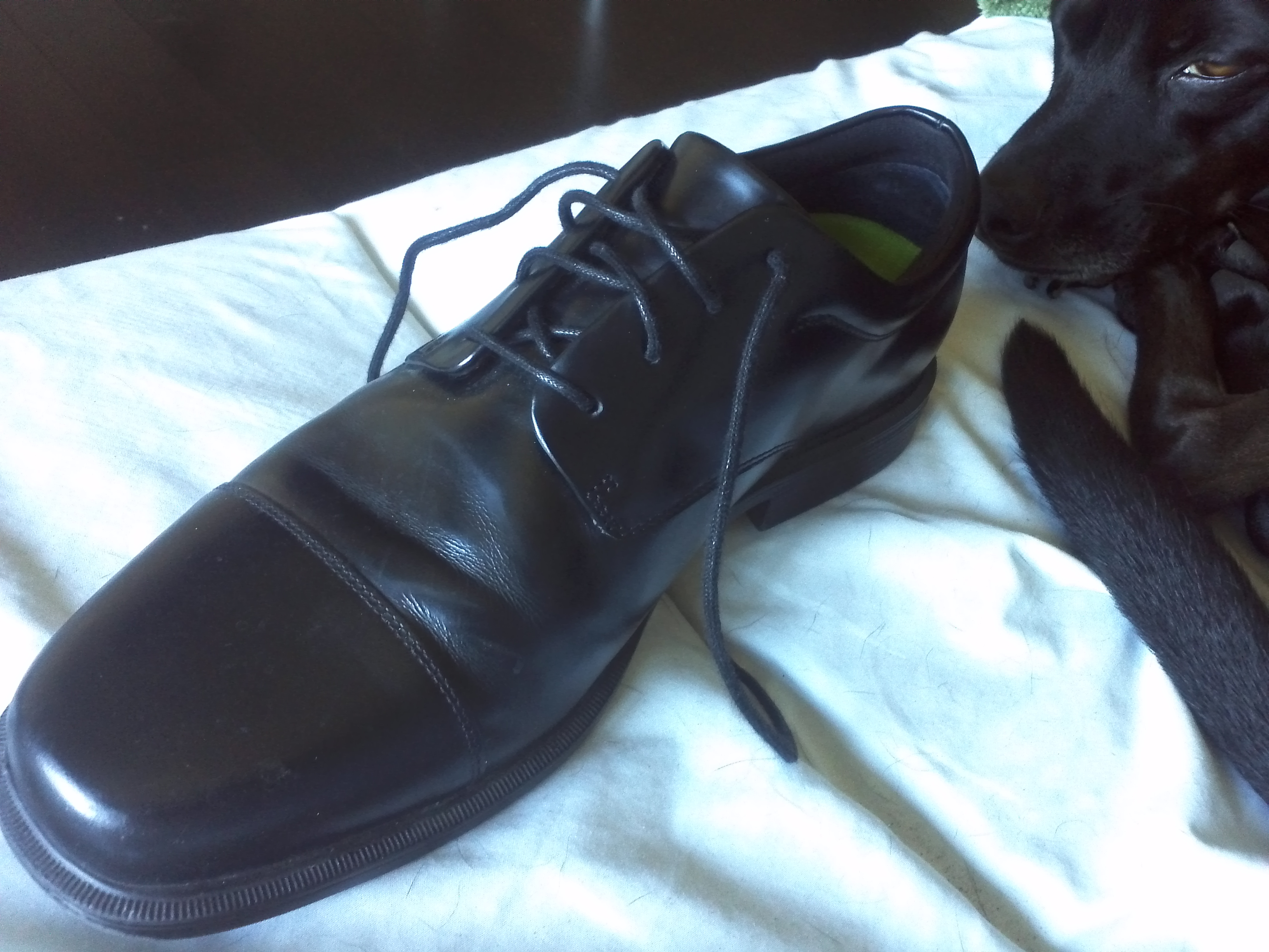 A picture of one of the new shoes. The lime green Superfeet orthotic can be seen within.